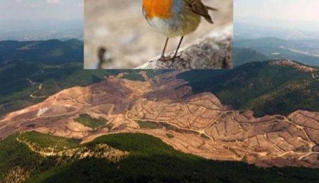 Ben bir kuş idim…