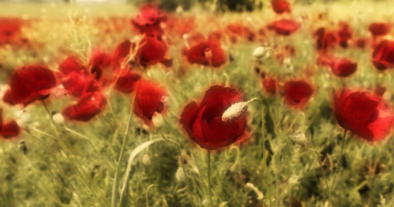 Homeros'un Söz Ettiği Ağaçlar, Çiçekler ve Diğer Bitkiler