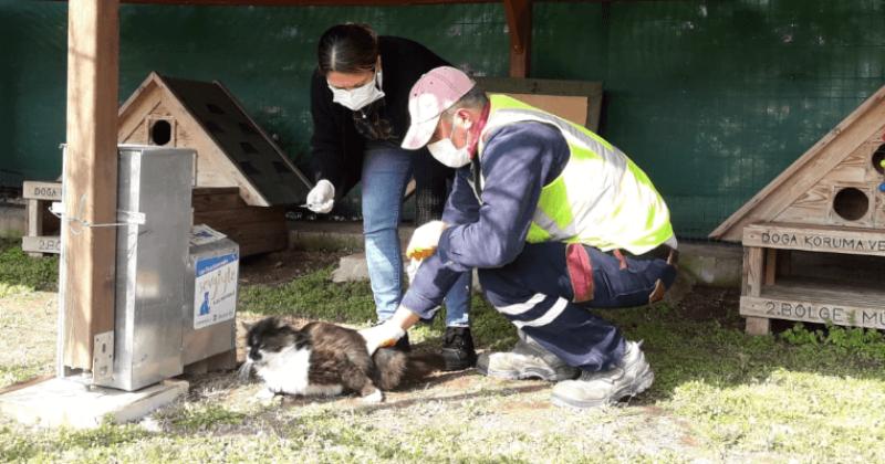 Kedi Köyünde Sağlık Taramaları Devam Ediyor