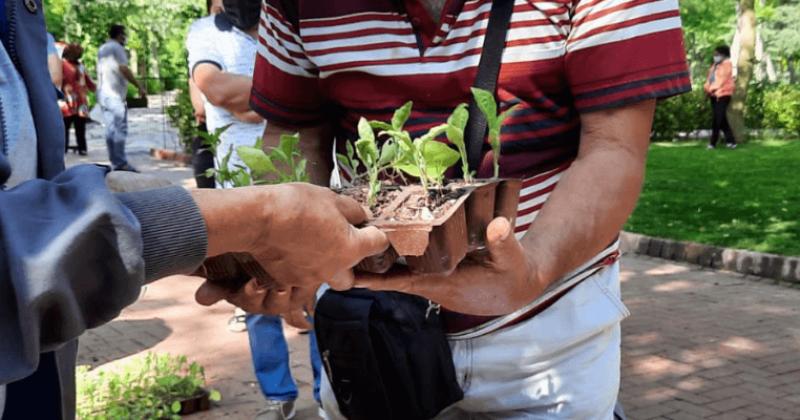 Biber ve Patlıcan Fideleri Kentliler İle Buluşturuldu