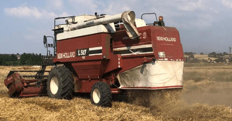 Atalık Buğdayların Hasadı Gerçekleştirildi
